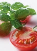tomatobazil.jpg