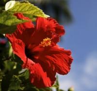 flower0822.jpg