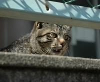 cat0918.jpg