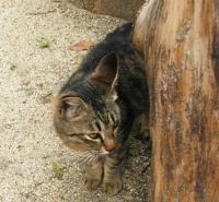 cat24.jpg