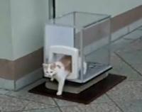 catlift.jpg