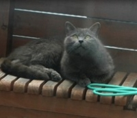 cat1004-3.jpg