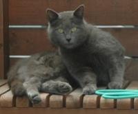 cat1004-2.jpg