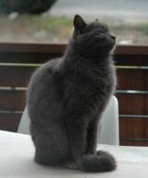 cat06101.jpg