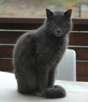 cat06102.jpg