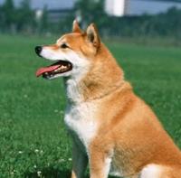 dog-oazuke.jpg