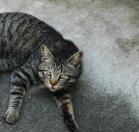 cat1113.jpg